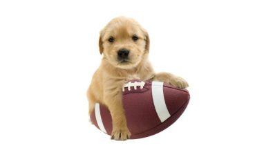 010815-NFL-Puppy-pi-ssm.vadapt.620.high.16.jpg